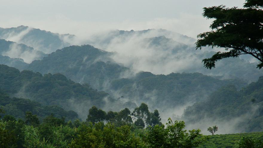 Nieblas en las cimas de Bwindi, el bosque impenetrable de Uganda. fiverlocker (CC)