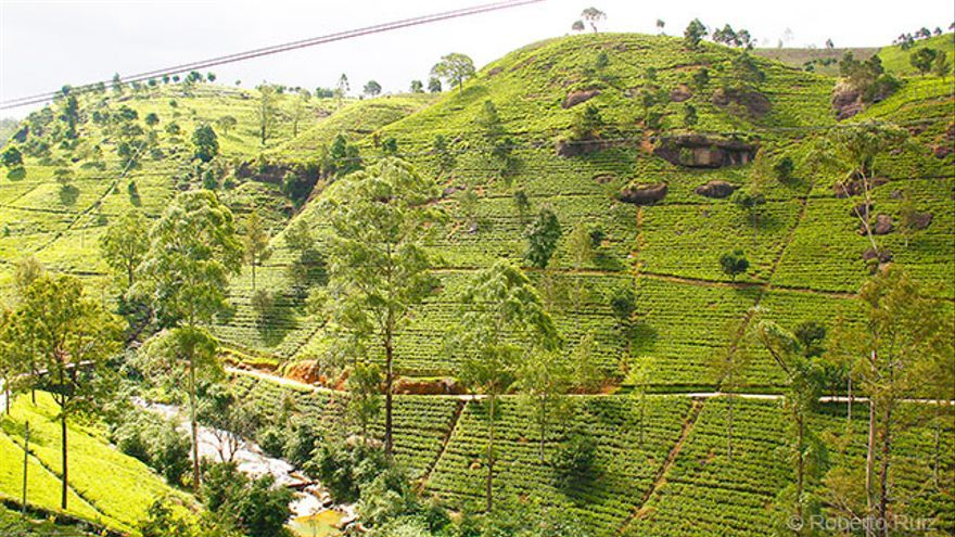 Montañas de Sri Lanka, plantaciones de té