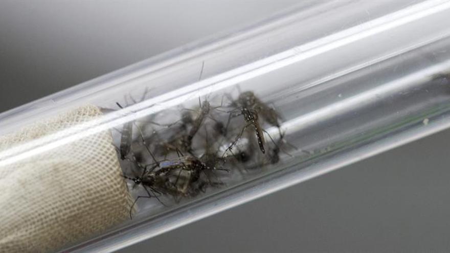 Sanidad confirma 23 casos de zika en España, entre ellos dos embarazadas