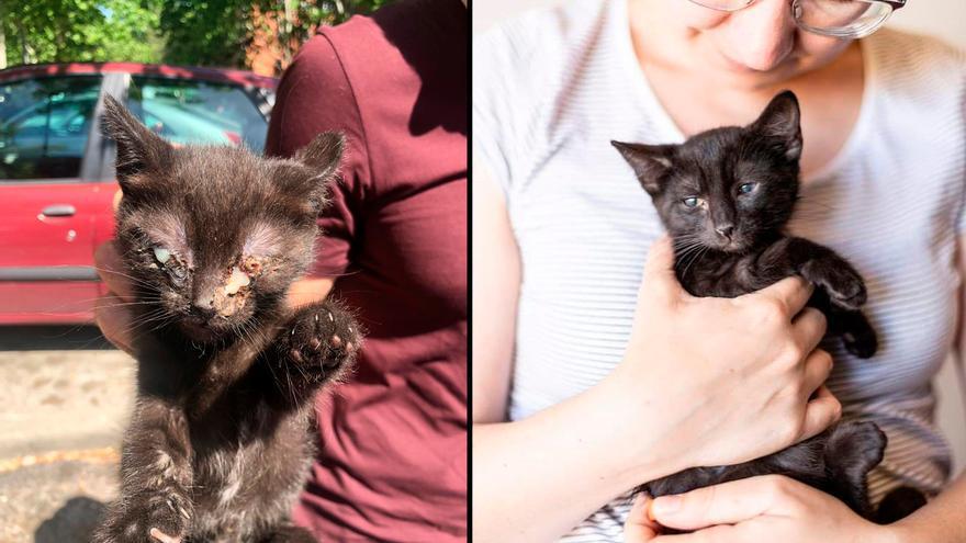 Boris, Nina y Nico fueron rescatados con pocas semanas de vida y hoy crecen felices