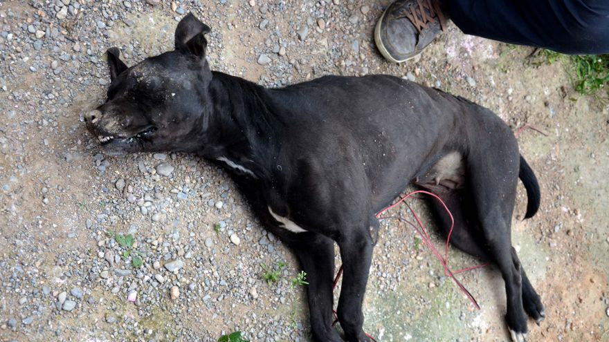 El perro hallado muerto con los cables con los que ataron las patas