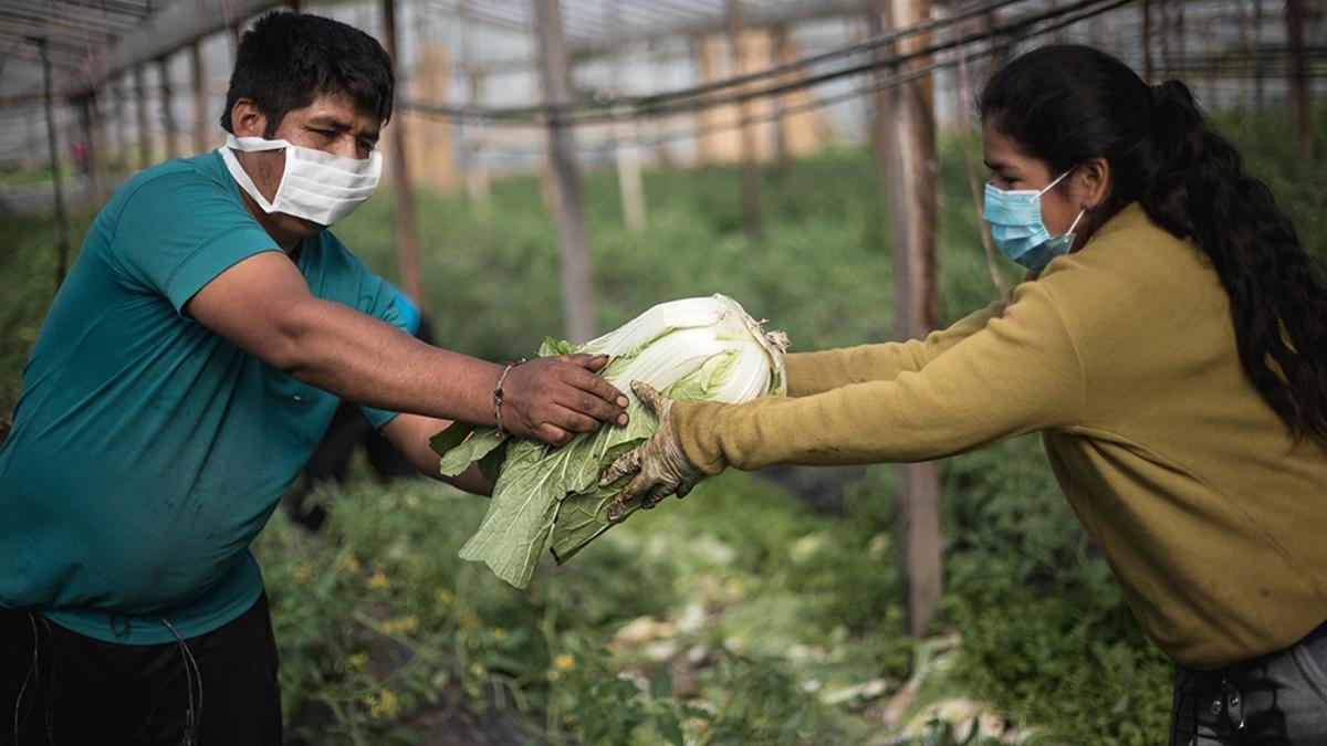 Integrantes de la Unión de Trabajadores de la Tierra (UTT), una de las organizaciones que impulsa la carta