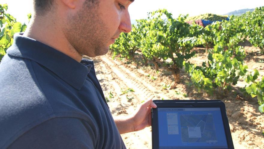 La DO Cava, distinguida por sus inspecciones en el sector vitivinícola