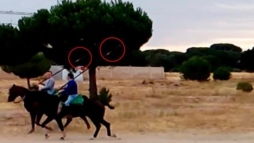 Caballistas portando presuntamente lanzas ilegales en la Vega de Tordesillas. Captura de pantalla de vídeo grabado por Gladiadores por la Paz.