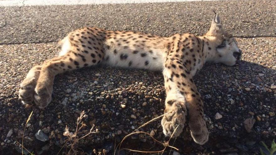 El cachorro ha fallecido atropellado en la carretera EX-103