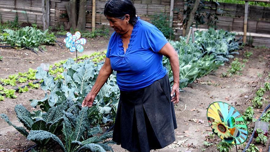 Teresa cocina para los alumnos de la escuela de su barrio con los productos orgánicos de su huerto.