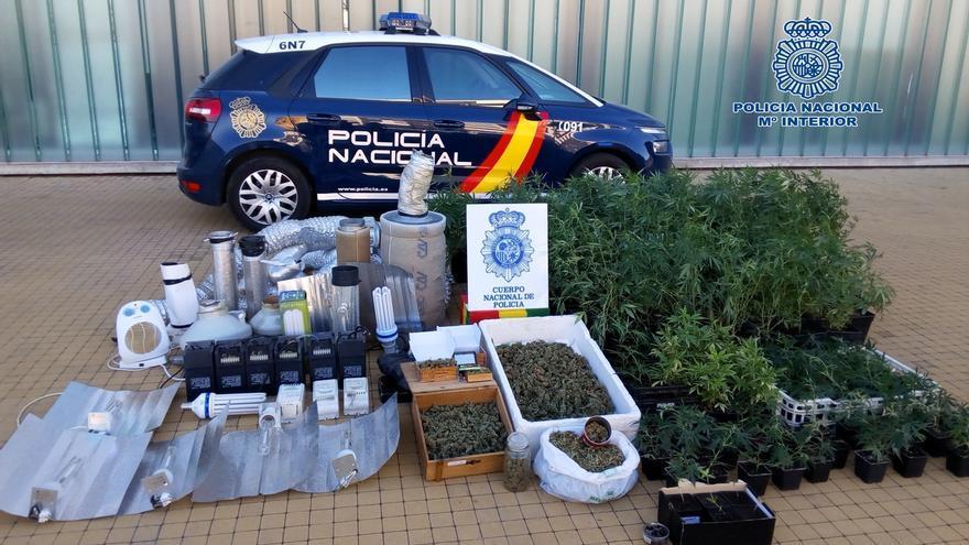 Desmanteladas dos grandes plantaciones de marihuana en Viguera y Lardero (Logroño) y detenidas 6 personas