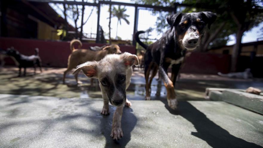 Un centro de rescate teme que cientos de perros vuelvan a las calles en Managua