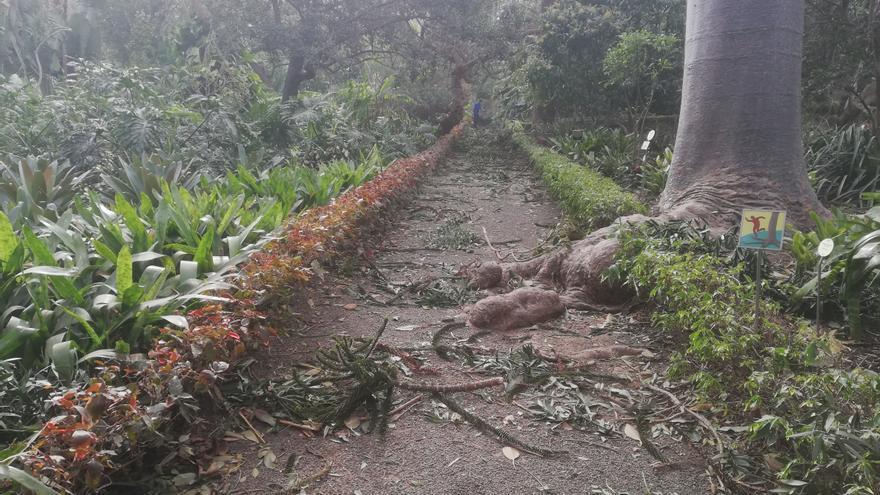 Destrozos en el jardín de aclimatación de La Orotava