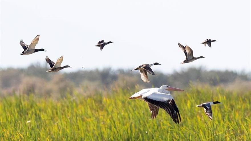 Aves migratorias, tema central de la Colombia Birdfair 2020