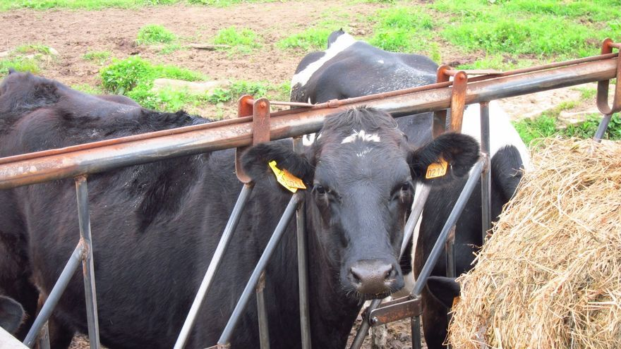"""UPA acusa a Arias Cañete de """"ignorar"""" la crisis de la ganadería en los presupuestos para 2013"""