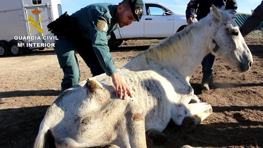 Hallan en Lucena del Puerto abandonados y desnutridos a 12 caballos y uno de ellos es sacrificado