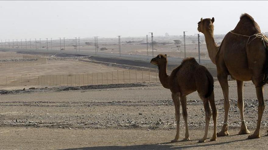 Imagen de archivo de camellos en Arabia Saudí.