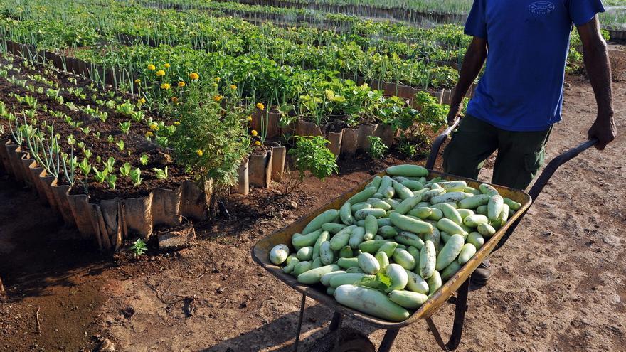 Cuba anuncia medidas para rescatar el sistema de cooperativas agrícolas