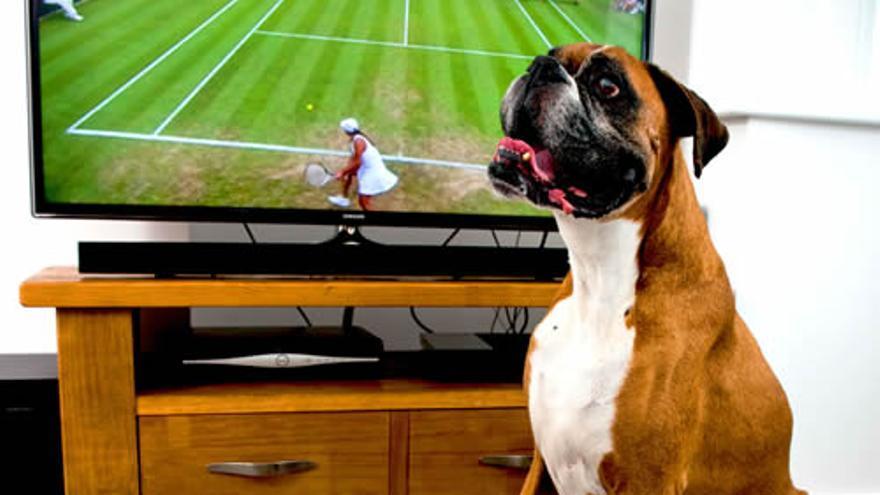 Mando a distancia gigante para perros (Imagen: Universidad de Central Lancashire)