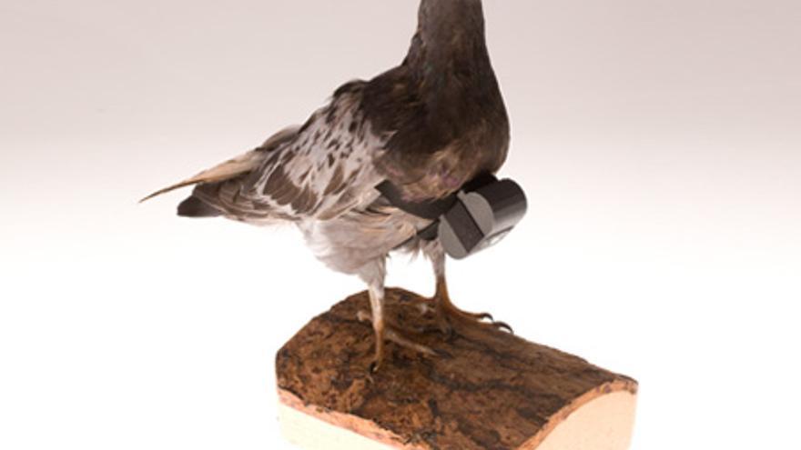 Cámara para palomas expuesto en el museo de la CIA.