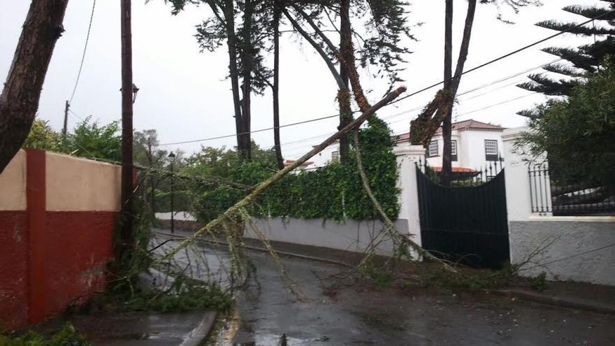 Efectos del temporal en La Laguna. (CANARIAS AHORA)