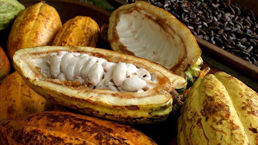 El cacao y el té verde pueden tratar efectos de la diabetes, según un estudio