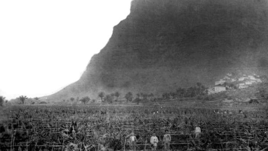 Zafra tomatera en Valle Gran Rey
