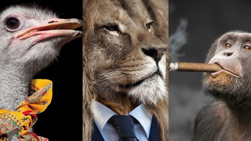 """""""La naturaleza crea todo tipo de especies...en las empresas"""": una guía (animal) de recursos humanos"""