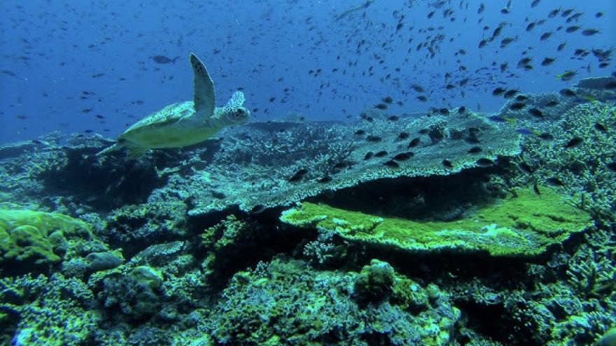 Tortuga marina en Sipadán.