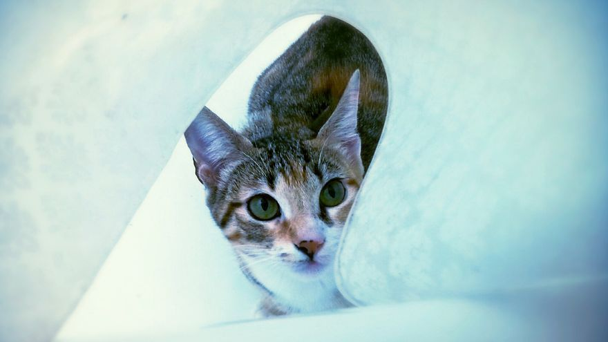 Los gatos son dominadores e imprevisibles.