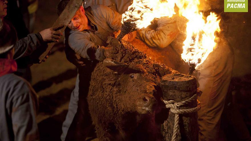 Toro Jubilo en el momento de prenderle fuego. Foto: PACMA