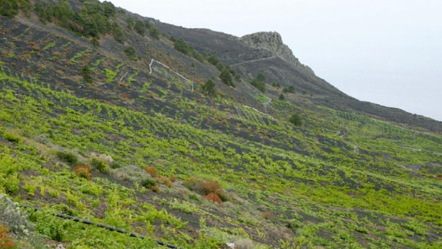 Imagen de archivo del paraje vitícola de Llanos Negros.