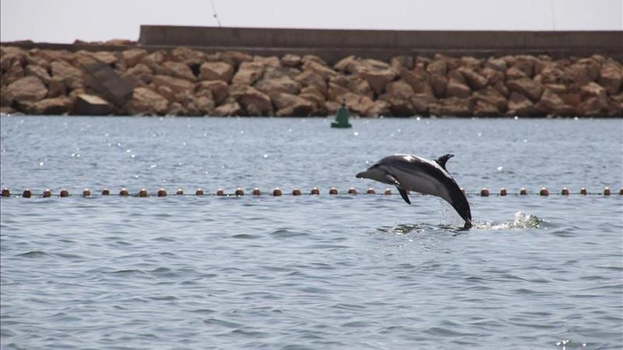 Guía práctica para convertirse en socorrista de delfines