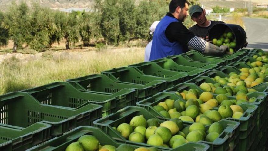 Trabajadores del limón en Los Carrillos