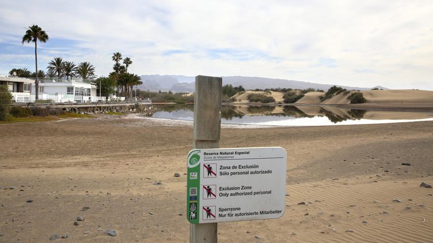 La Charca de Maspalomas este lunes con el nivel de agua muy bajo.