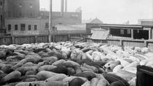 Imagen de un matadero. © Library and Archives Canada