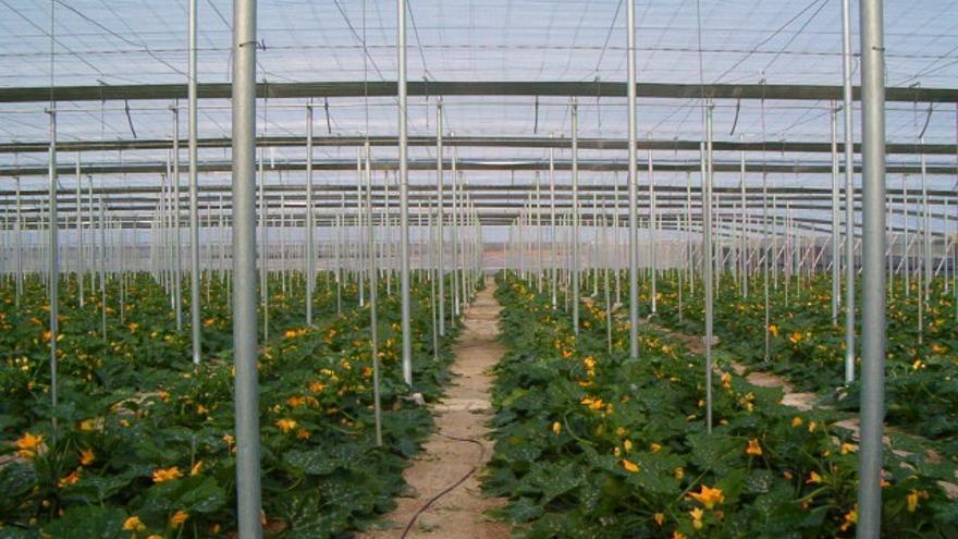 Un 80 por ciento de agricultoras y ganaderas de COAG y Ceres secundan los paros y huelga