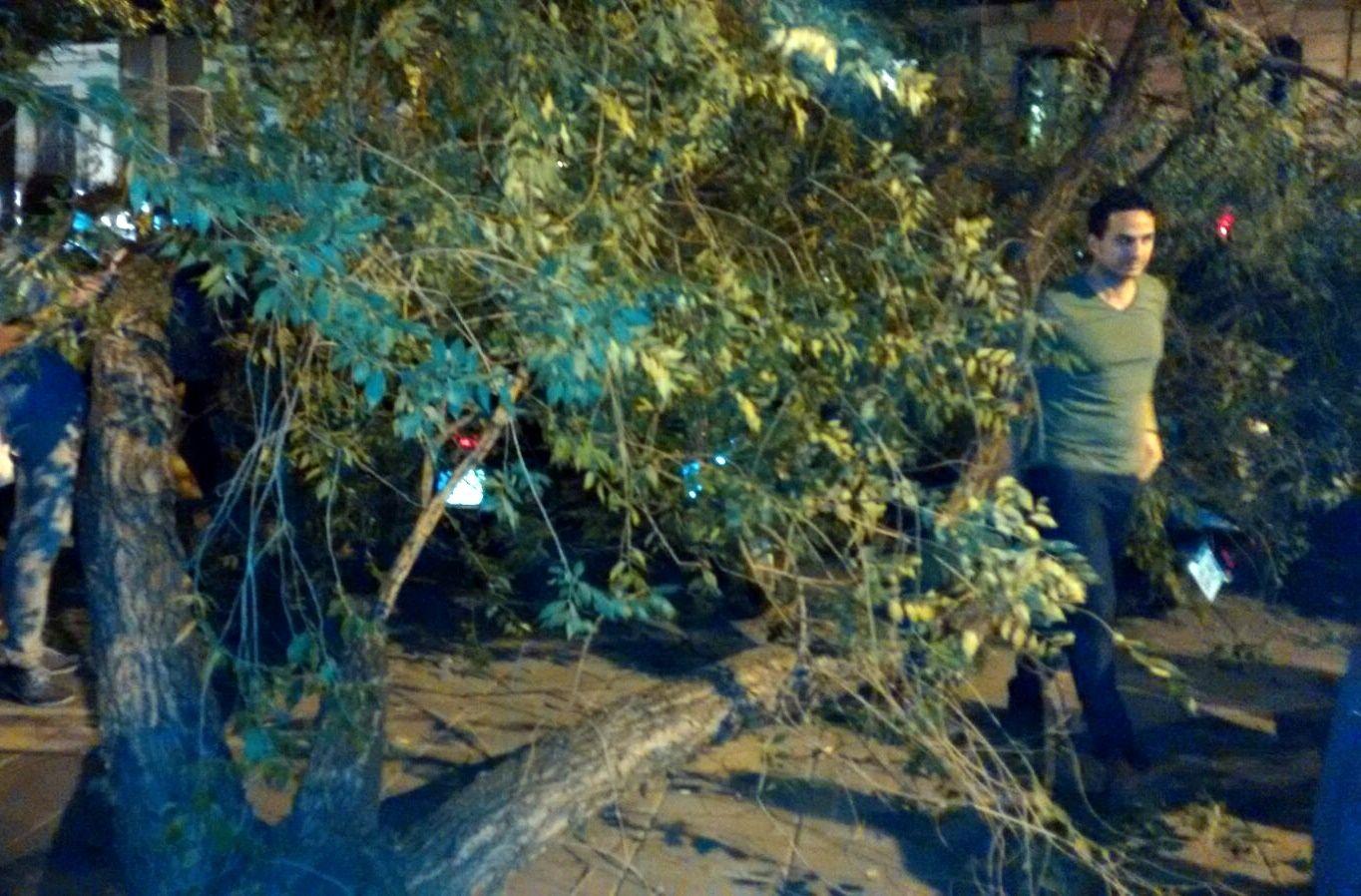 El árbol caído en el 139 de la calle Fuencarral | SOMOS MALASAÑA