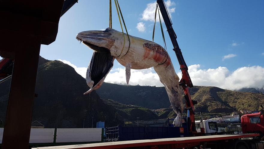 El cetáceo en el momento de ser retirado del agua en el puerto de la capital. Foto: LUZ RODRÍGUEZ