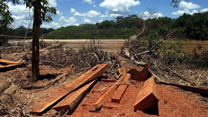 La deforestación de la selva amazónica brasileña cayó 40 por ciento entre marzo y abril