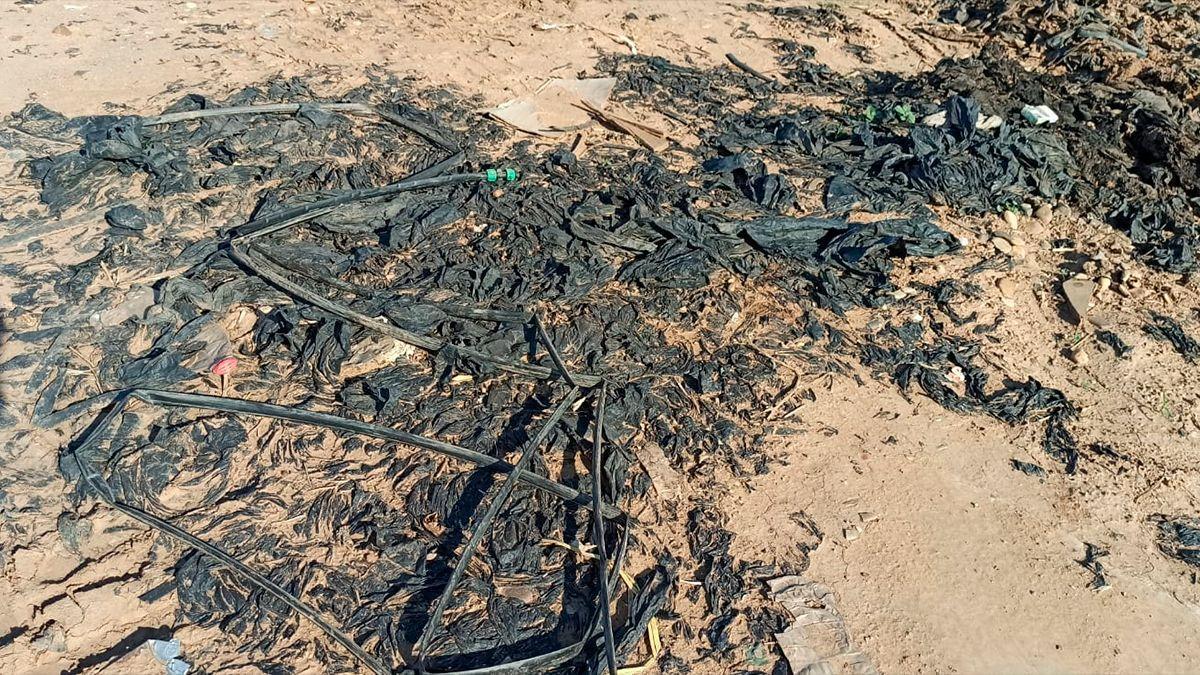 Plásticos sin retirar en fincas de Posadas | ECOLOGISTAS EN ACCIÓN