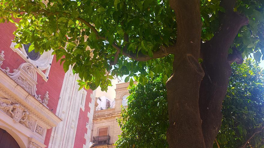 """El Ayuntamiento de Sevilla hará una """"reposición masiva"""" de árboles. / J.M.B."""