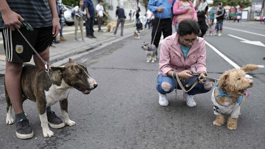 Más de 137.000 perros y gatos fueron abandonados en España en 2016