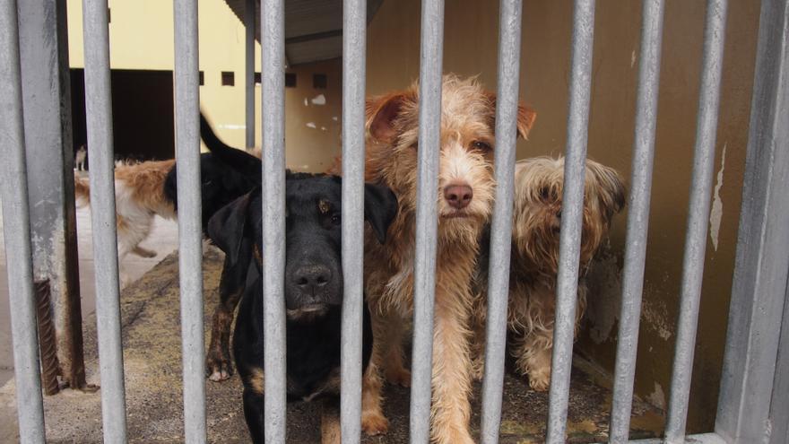 Perros en el albergue de Bañaderos.JPG