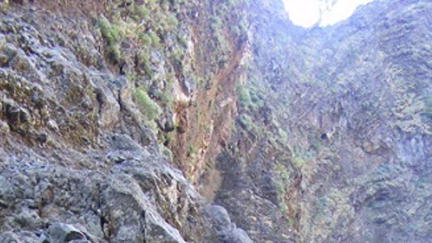 Varios cedros, en un acantilado de las cumbres de La Caldera, retorcidos y con ramas secas o agonizantes.