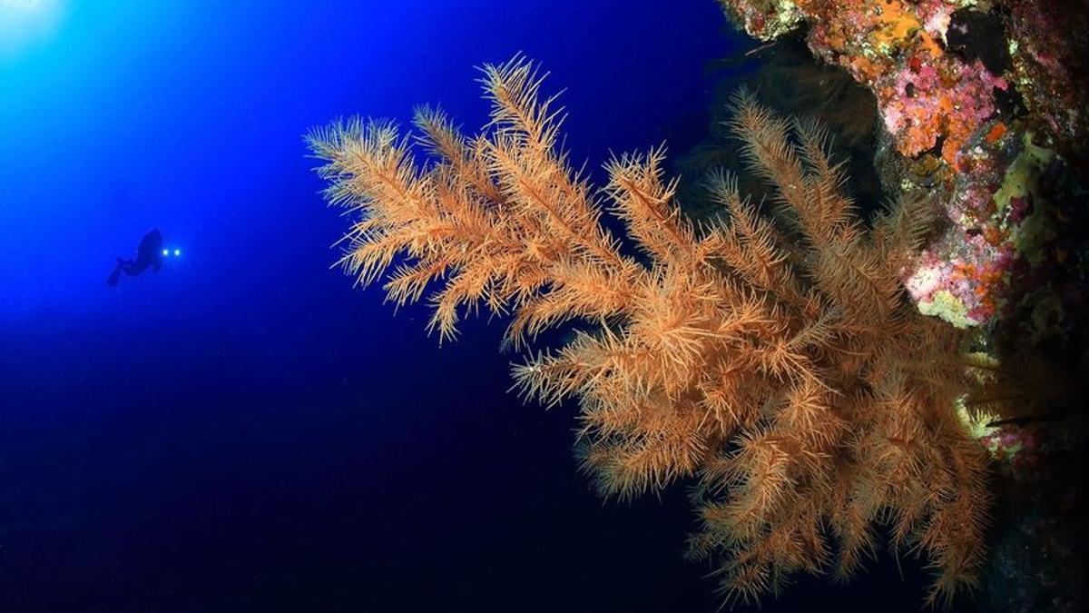 Imagen de archivo del fondo marino de La Palma. Foto: Isla Azul.