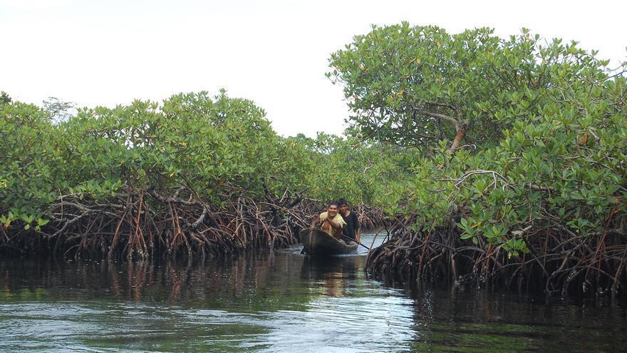 Remando entre los manglares. Tobias Eder