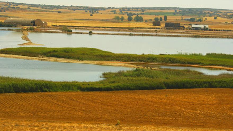 Denuncian daños a la avifauna en lagunas de la provincia de Albacete por la construcción de plantas solares y eólicas