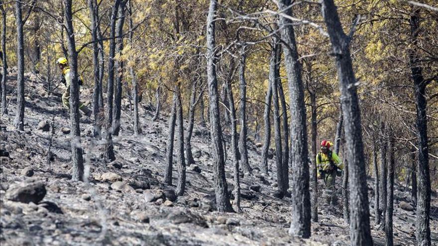 Controlado el fuego que arrasó 5,4 hectáreas de pinada en Calasparra (Murcia)