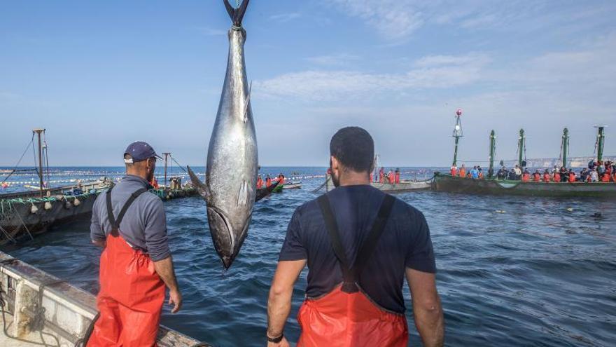 """España ve """"insuficientes"""" las mejoras en la propuesta de cuotas pesqueras"""