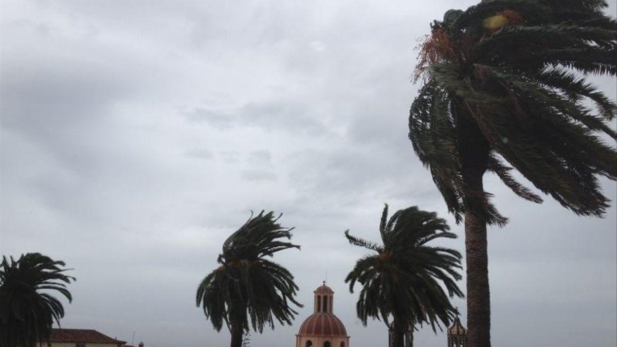 El viento menea las palmeras en La Orotava, Tenerife