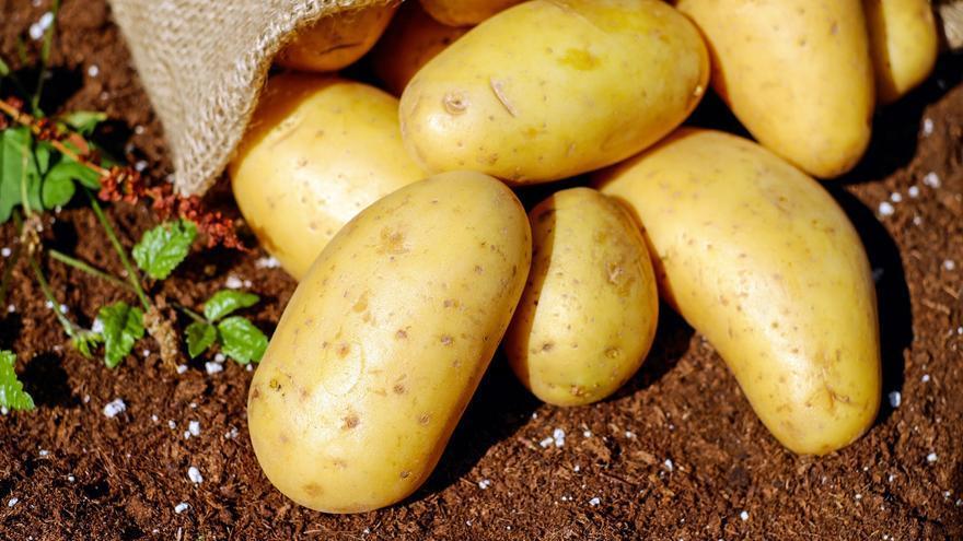 Es cierto que las patatas viejas engordan más que las nuevas?