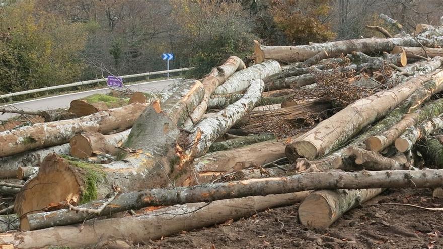 Tala de árboles en Besaya.   ECOLOGISTAS EN ACCIÓN