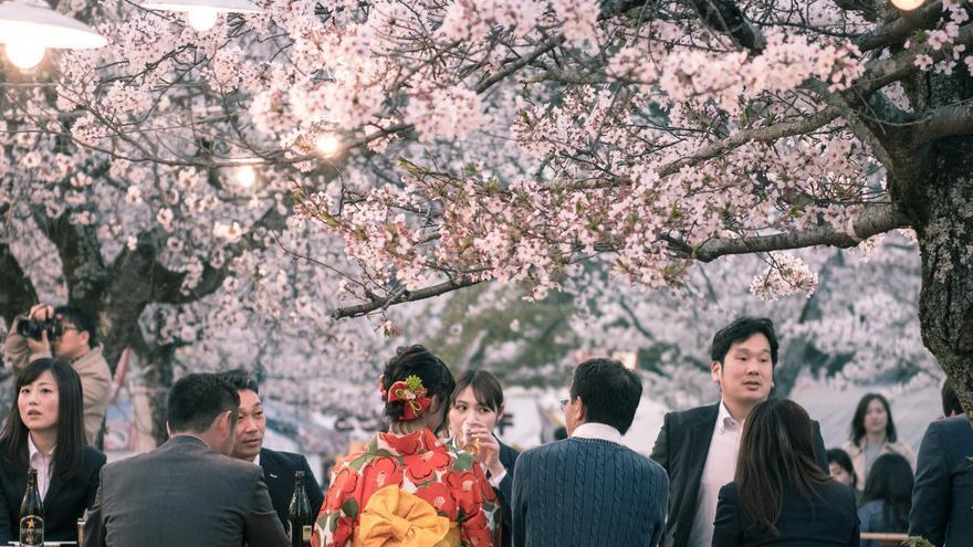 Imagen de archivo. La fiesta Hanami de la primavera en Japón.